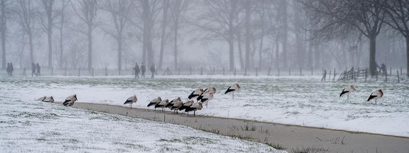 winter nederland utrecht oscar brak fotografie ooievaar